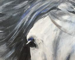 Bild 'Islandpferd auf Schwarz' - Detailansicht 1