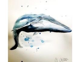Der Blauwal Aquarell