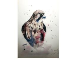 Der Falke Aquarell
