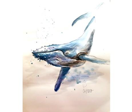 Der Wal Aquarell