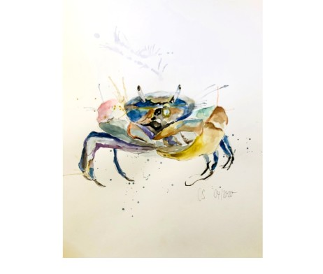 Die Blaukrabbe Aquarell